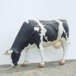 COW HEAD DOWN 1