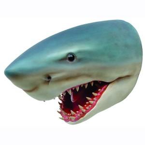 SHARK HEAD 1