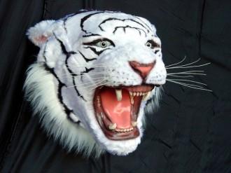 WHITE TIGER HEAD 1