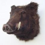 WILD BOAR HEAD 1
