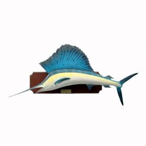SAIL FISH 1