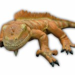 IGUANA NEW COLOR (Big) 1