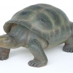 TURTLE (REALISTIC COLOR) 1