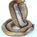 COBRA WITH GOLD 1