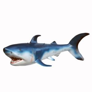SHARK (small) 1