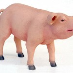PIG STANDING 1