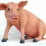 PIG SITTING 1
