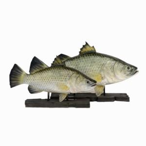 BARRAMUNDI FISH WITH BASE (3 FT